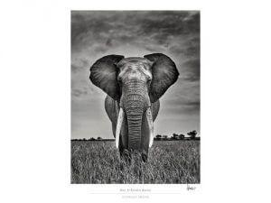 expo-elephant-dream